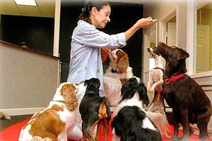 Morningstar Dog Training Group Sessions
